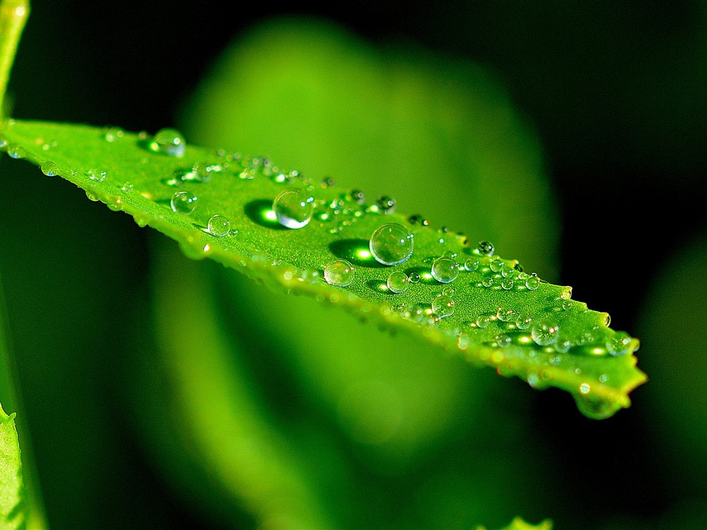 Fresh droplets green leaf-Nature HD Wallpaper - 1024x768 wallpaper download