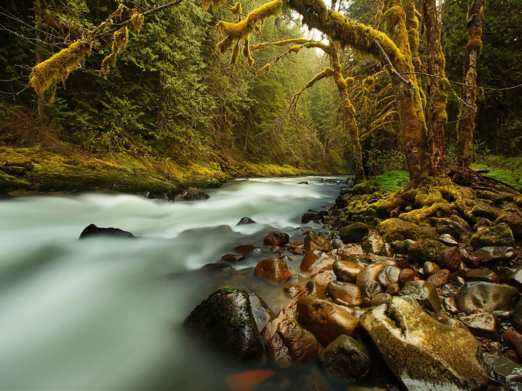 Original forest stream moss rock - 1024x768 wallpaper download
