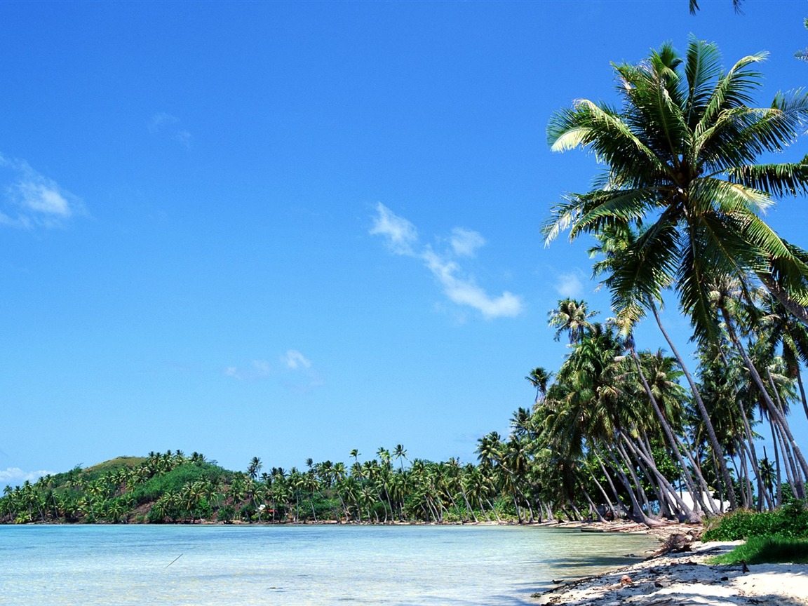 coconut trees swaying in the Tahitian coast wallpaper - 1152x864 wallpaper download