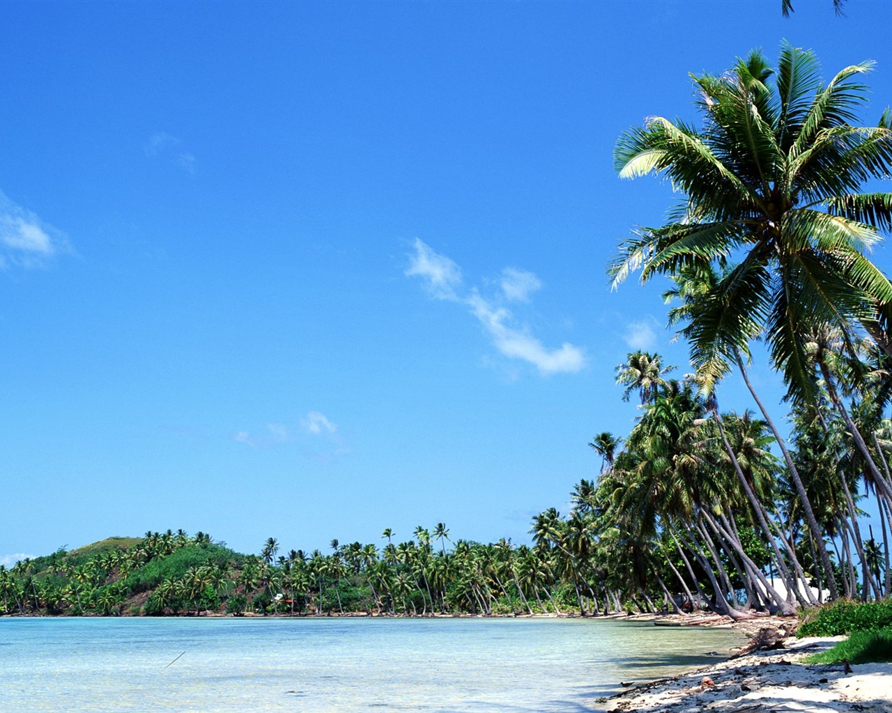 coconut trees swaying in the Tahitian coast wallpaper - 1280x1024 wallpaper download