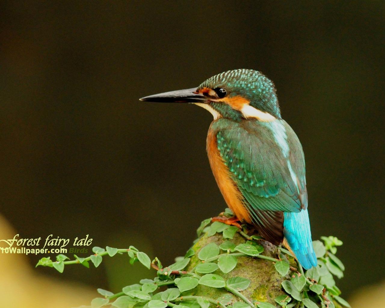 Kingfisher Calendar Wallpaper Download : Look sad kingfisher woods wallpaper