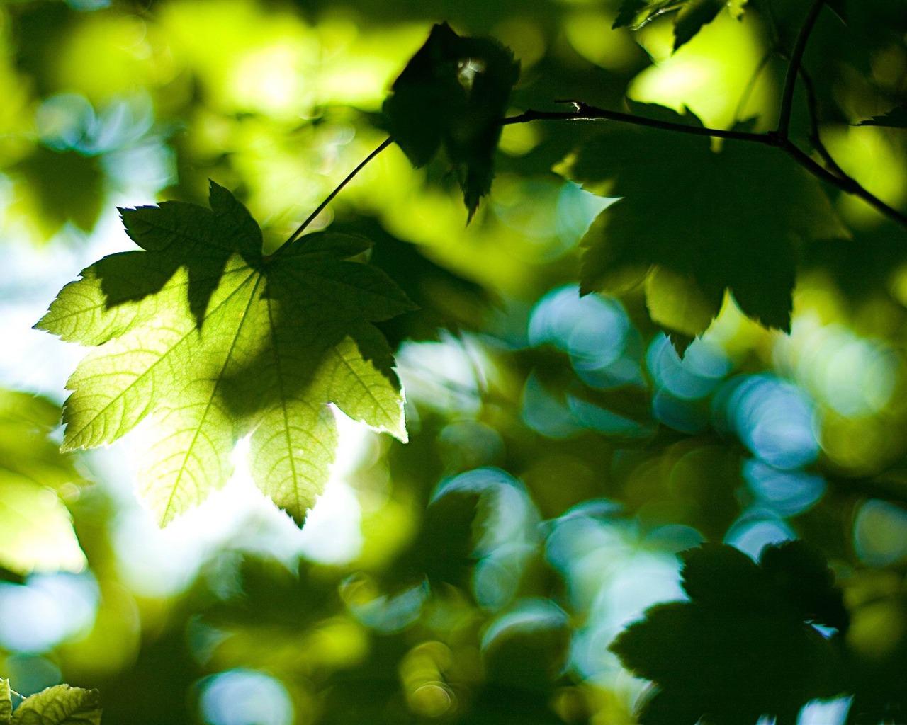 叶子-夏日自然高清壁纸 - 1280x1024 壁纸 下载图片