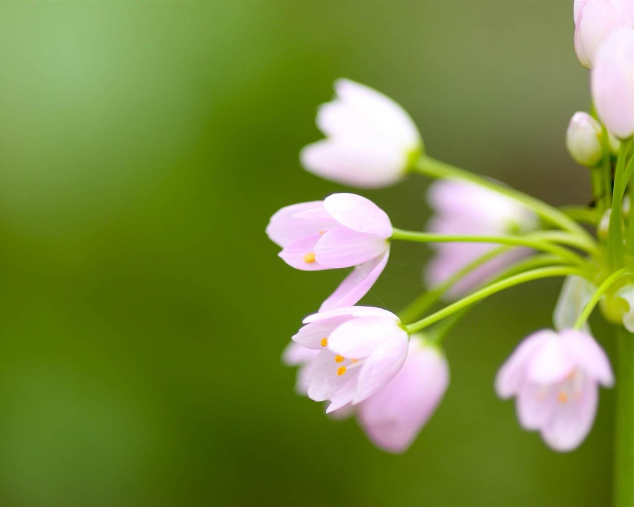花卉模糊-植物鲜花高清壁纸 - 1280x1024 壁纸 下载图片