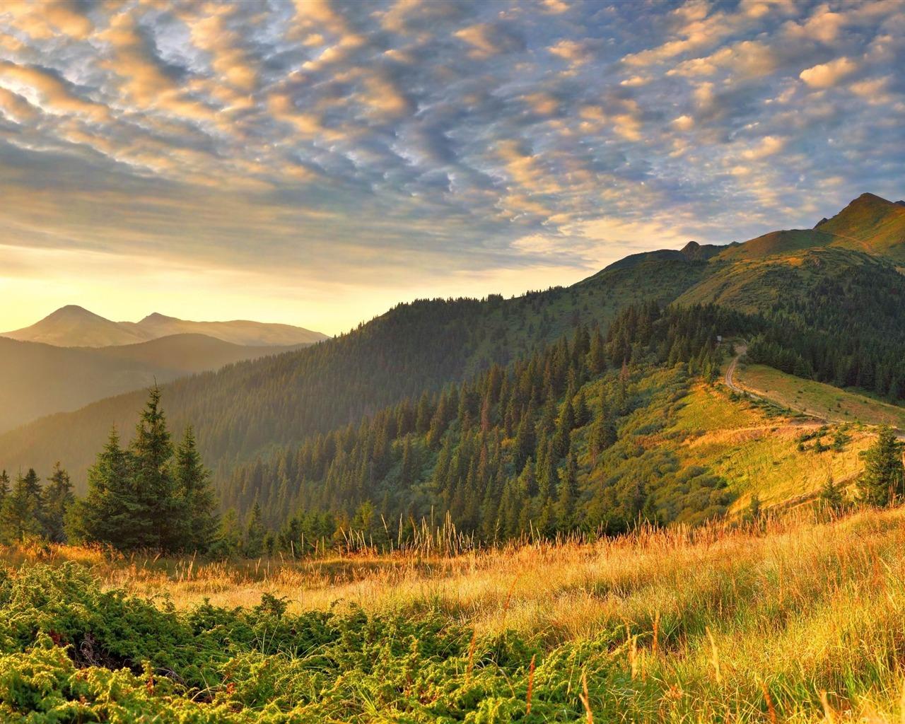 描述: 山上植被菌群-自然高清壁纸 当前壁纸尺寸: 1280 x 1024图片