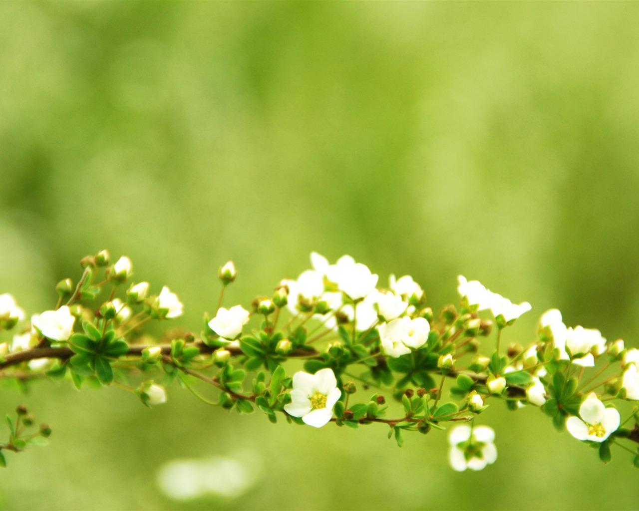 描述: 春天的树枝-季节高清壁纸 当前壁纸尺寸: 1280 x 1024图片