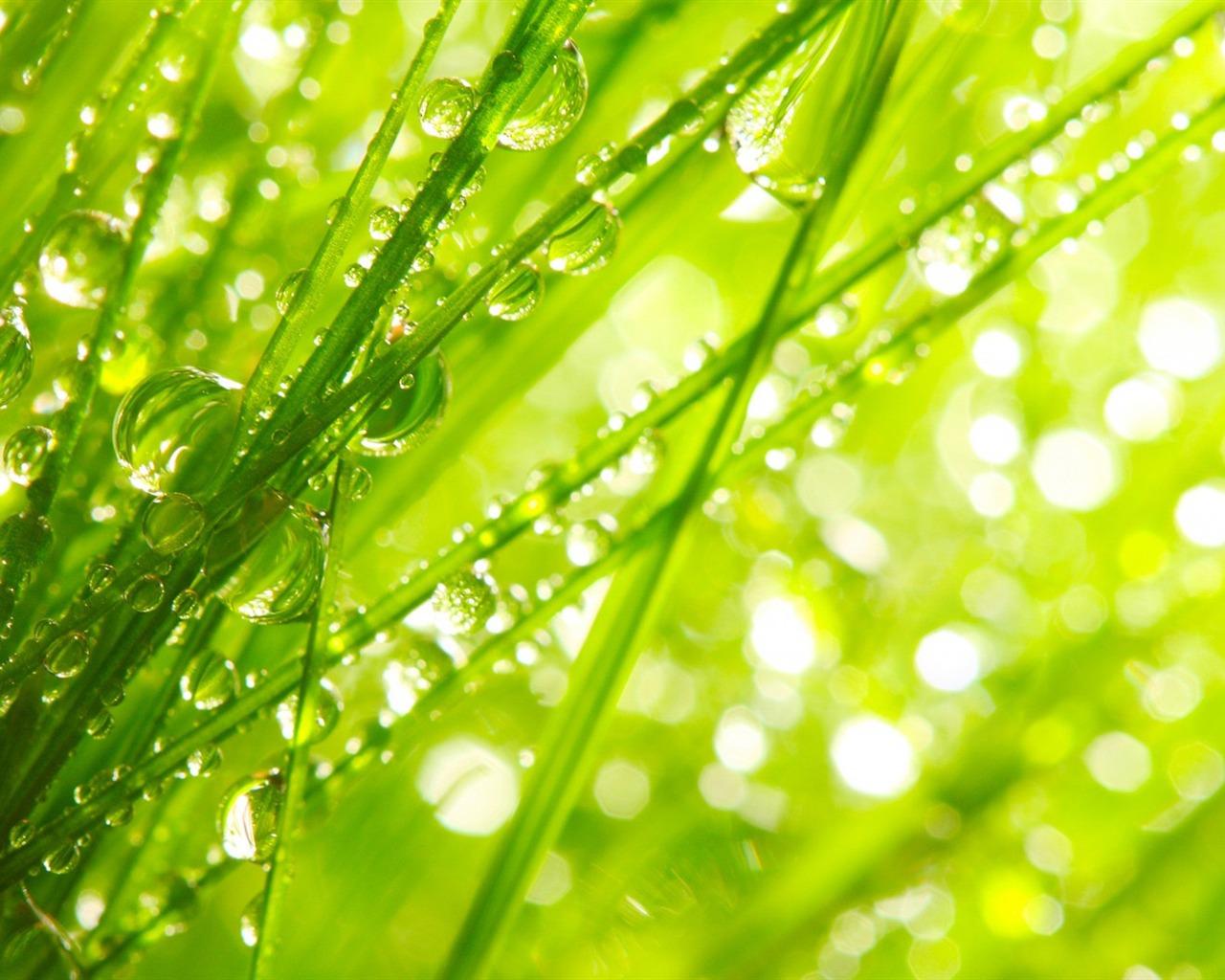 描述: 潮湿的草绿色-写真高清壁纸 当前壁纸尺寸: 1280 x 1024图片
