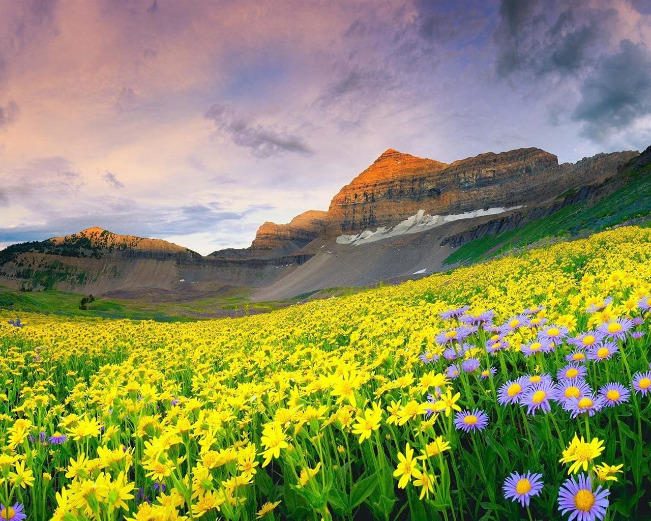 描述: 美丽的山花-风景のhd壁纸 当前壁纸尺寸: 1280 x 1024图片