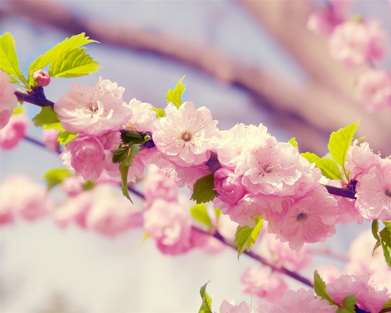 春季唯美樱花摄影高清壁纸 - 1280x1024 壁纸 下载图片