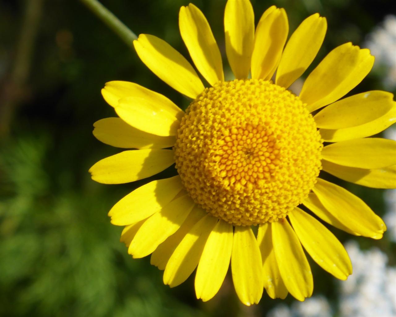描述: 花黄色花瓣-2016高品质高清壁纸 当前壁纸尺寸: 1280 x 1024图片