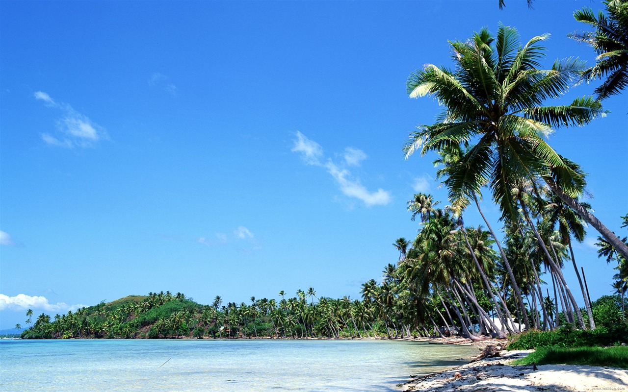 coconut trees swaying in the Tahitian coast wallpaper - 1280x800 wallpaper download
