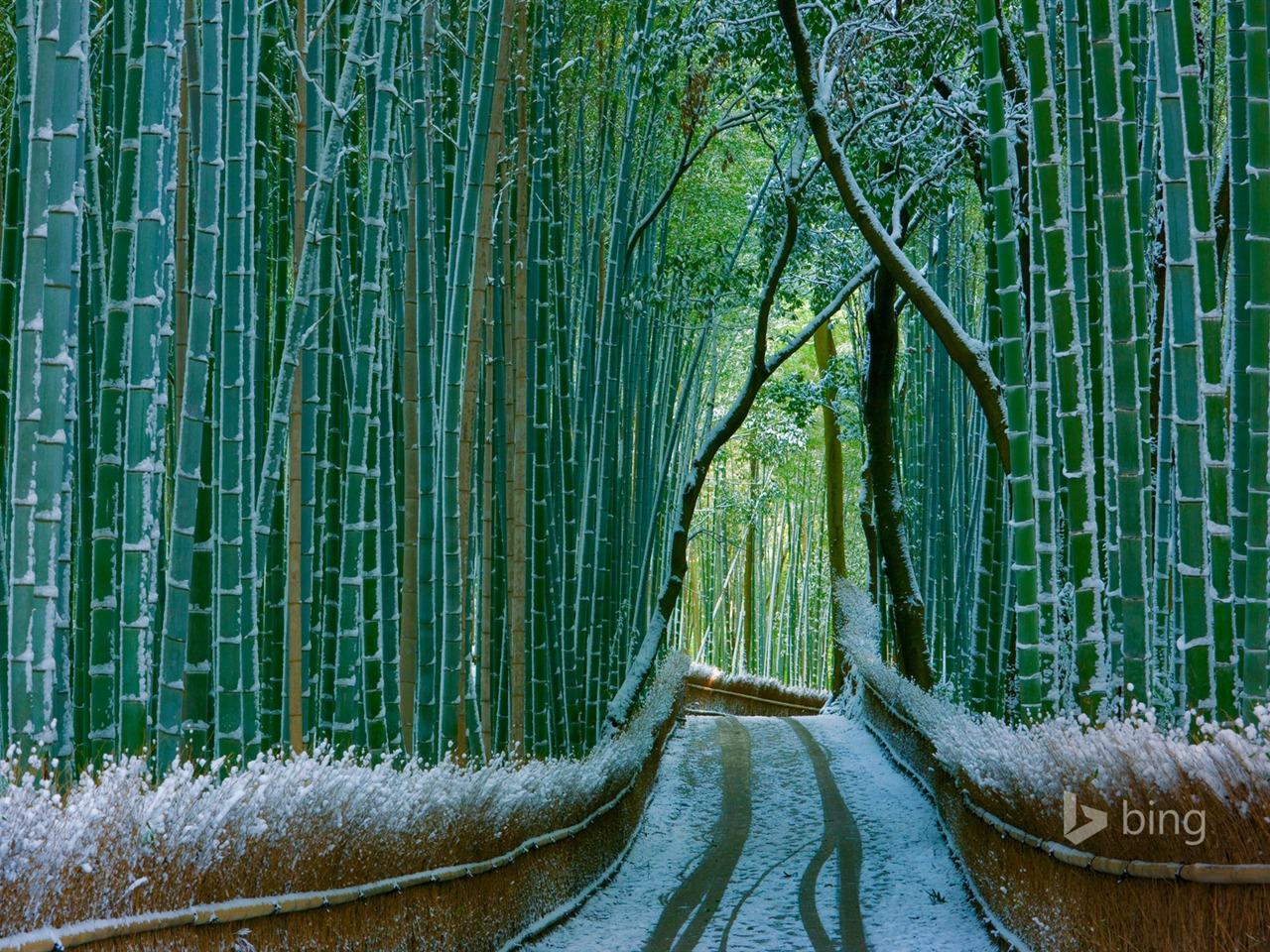 Japan Bamboo Forest Arashiyama-2016 Bing Desktop Wallpaper ...