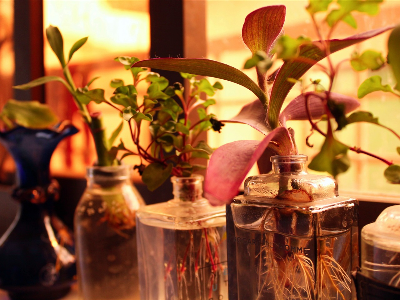 Window sill glass bottle plant close-up - 1280x960 wallpaper download