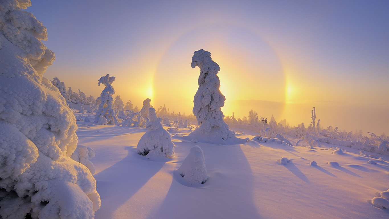 Germanys_Ore_Mountains_halo_around_a_snow-covered_trees_wallpaper