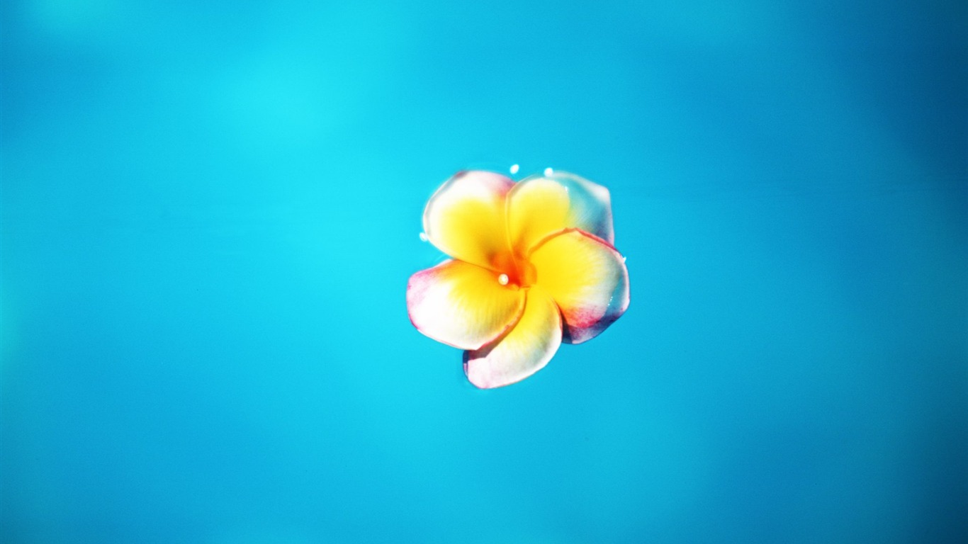 floating_on_the_surface_of_the_yolk_flower_wallpaper