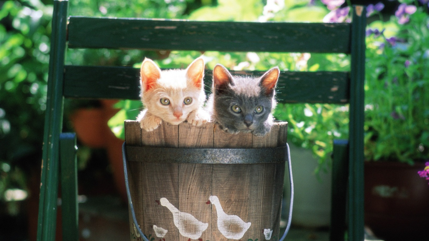 Charminging_kittens_Two_Baby_Kittens_in_bucket