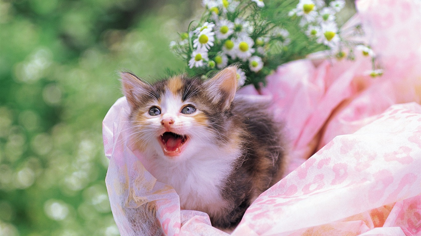 Cuddly_kitten_in_flower_basket