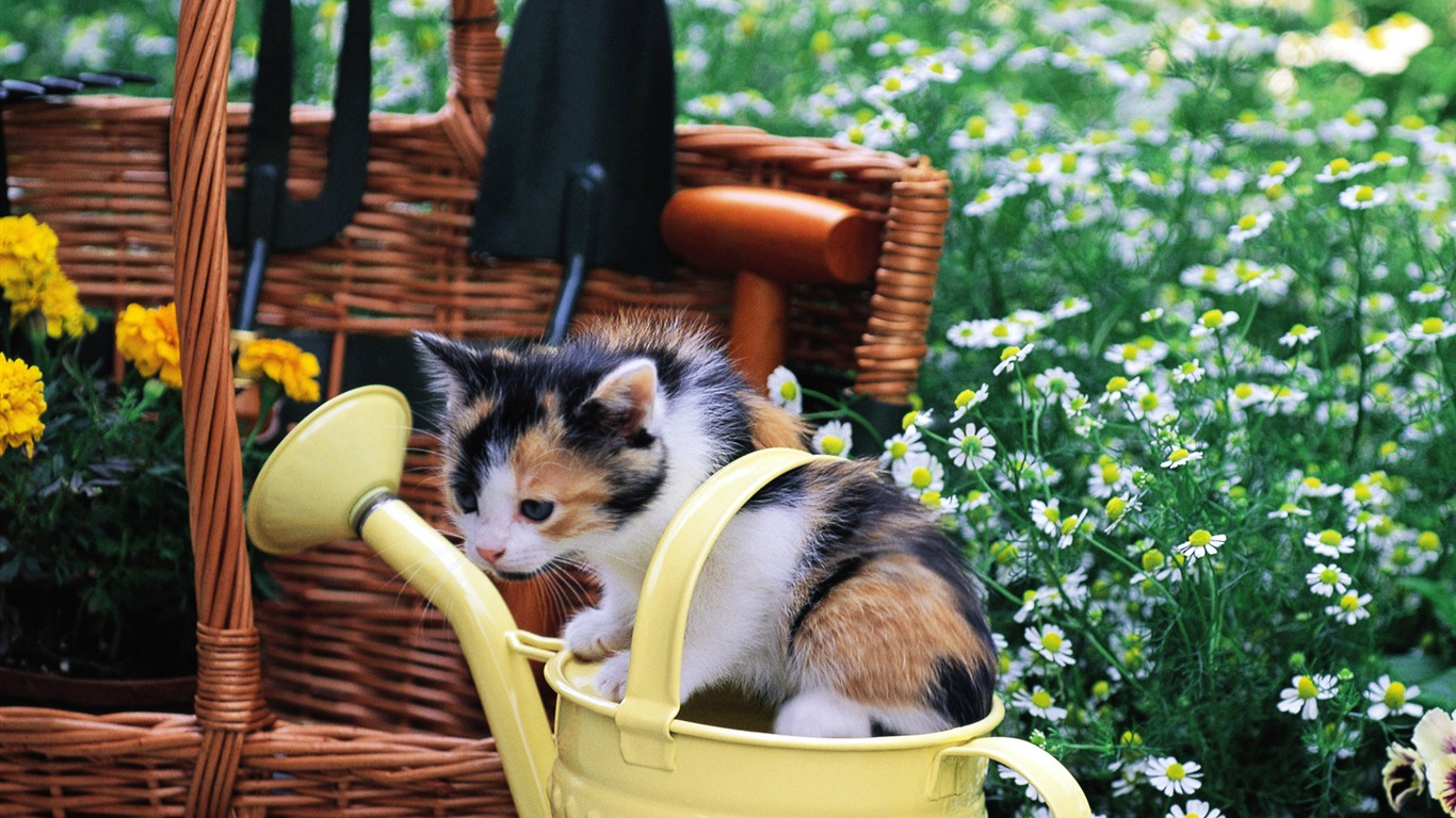 Kitten_gardener_Baby_Kittens_Wallpaper