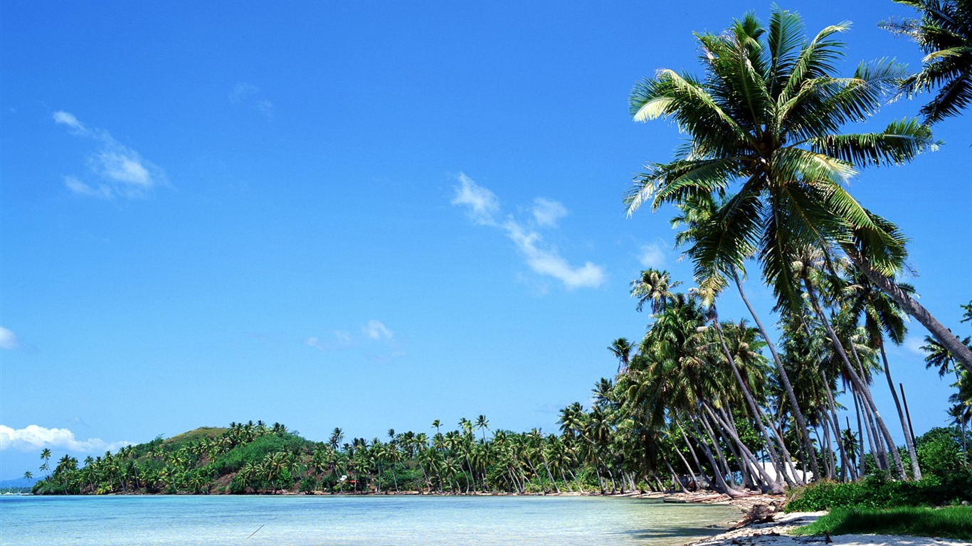coconut_trees_swaying_in_the_Tahitian_coast_wallpaper