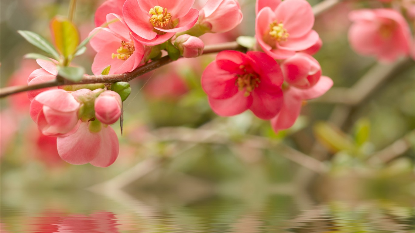 Pink_Peach-September_flowers_wallpaper