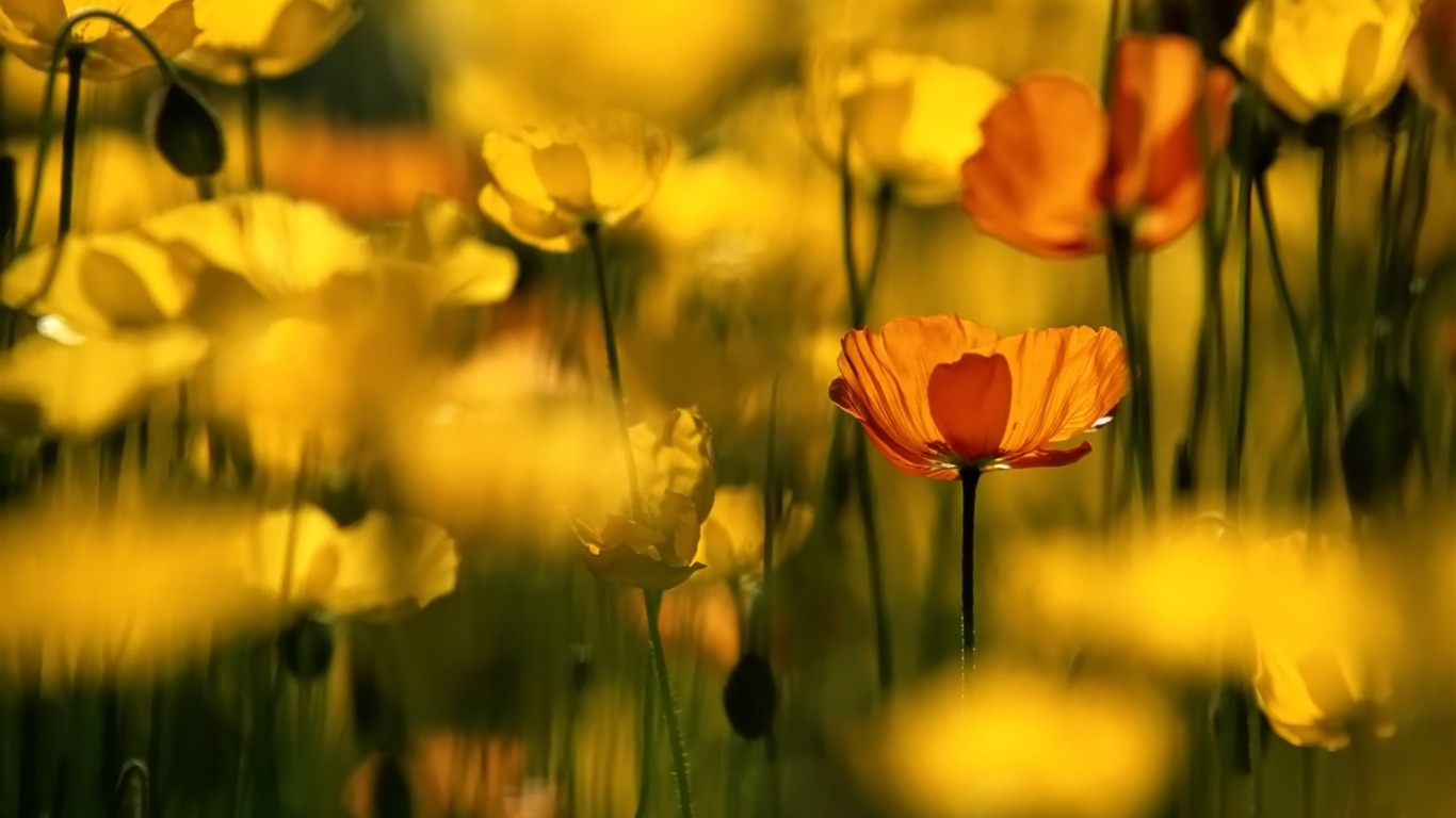 Yellow_wildflowers-September_flowers_wallpaper