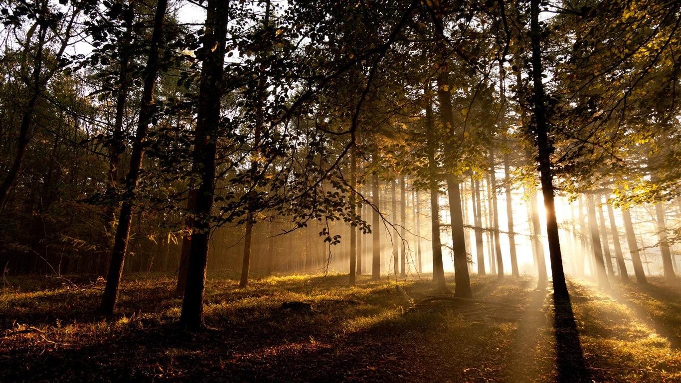 Forêt Mystique-papier Peint Paysage Forestier Aperçu