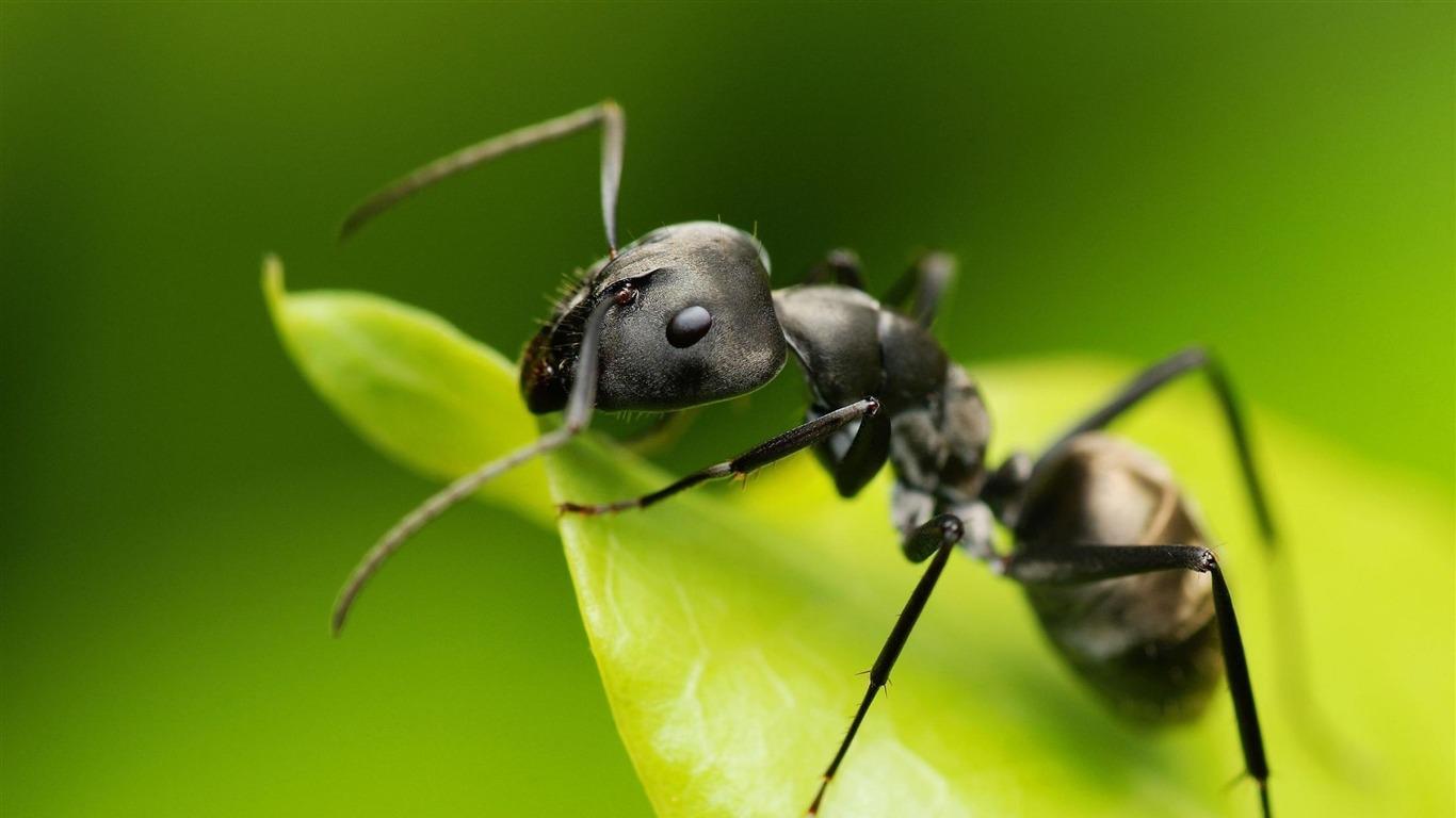 Kenapa Semut Bisa Jalan di Tembok? | Rasa Kehidupan