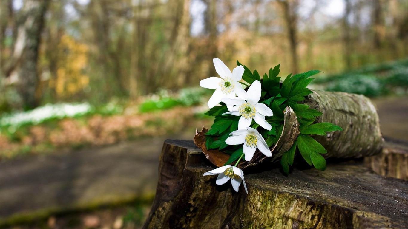 Fleurs de la forêt au printemps fond d écran la photographie fleurs