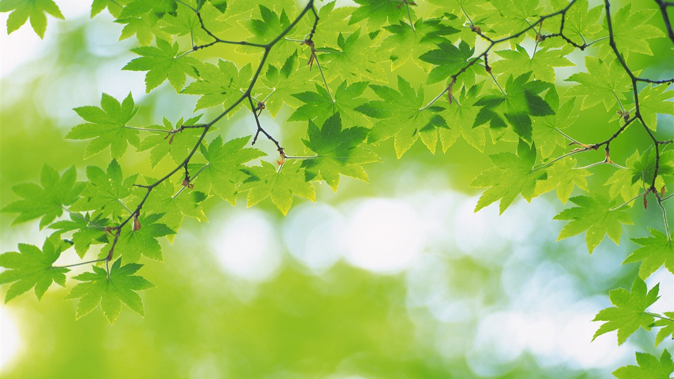 Fresh green leaves theme desktop wallpapers 05 1366x768 for Ideanature