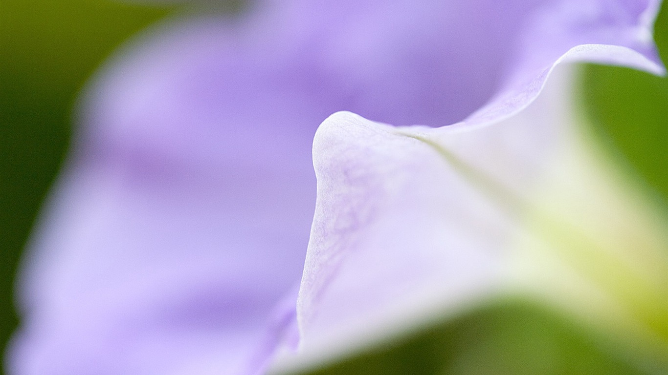 purple_macro-Flower_Desktop_wallpaper