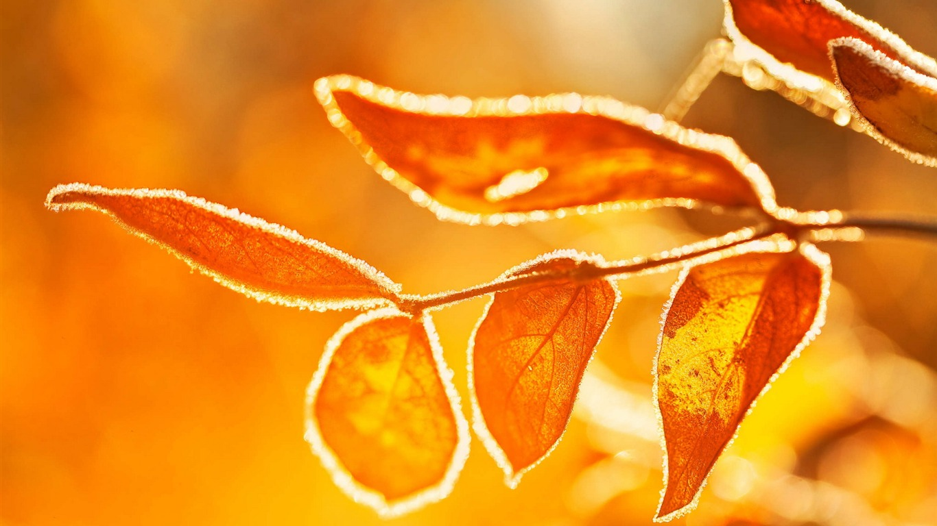 Yellow_leaves-Ubuntu_13_system_Widescreen_Wallpaper
