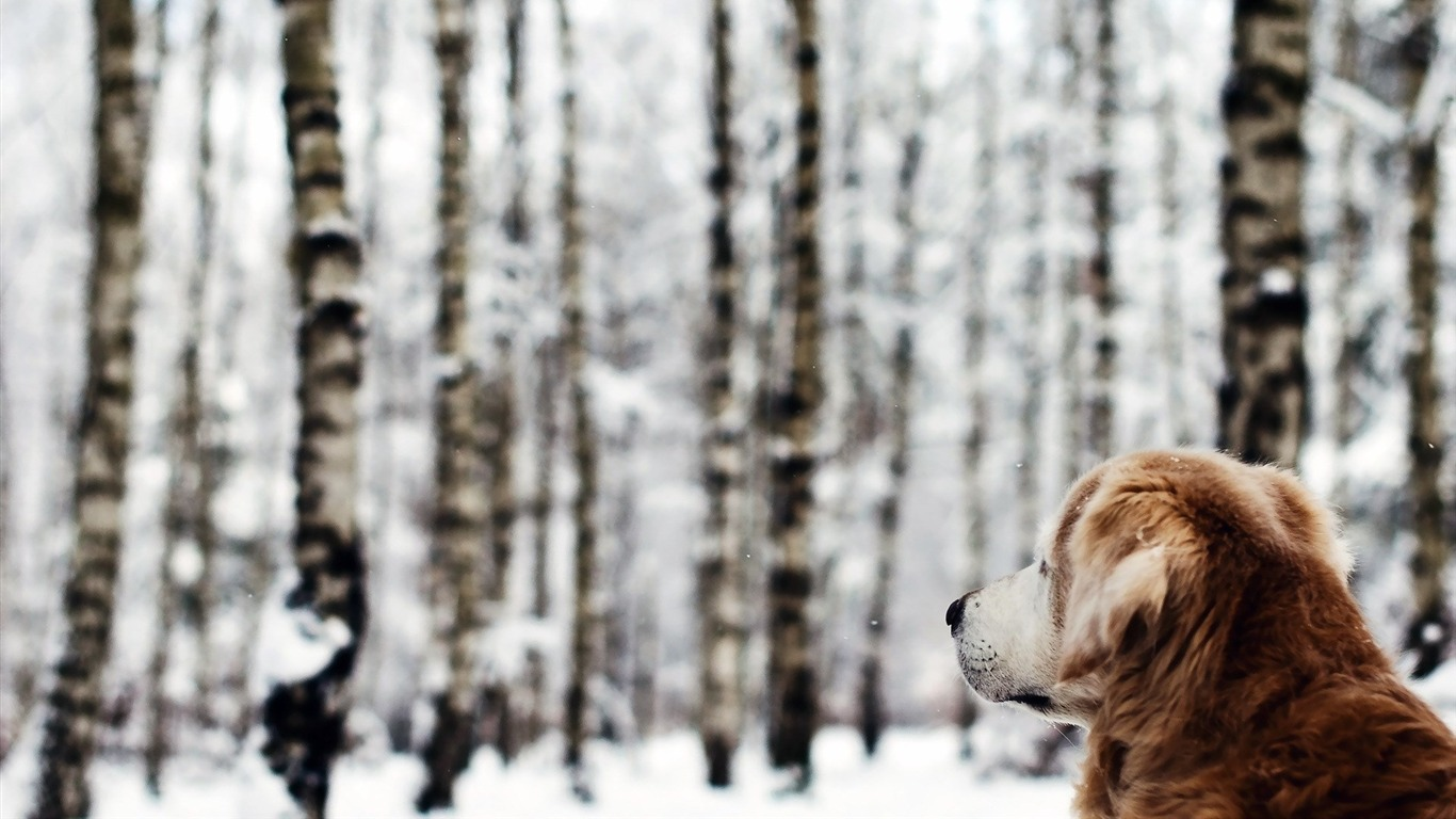 dog_forest_winter-Animal_Photo_Wallpaper