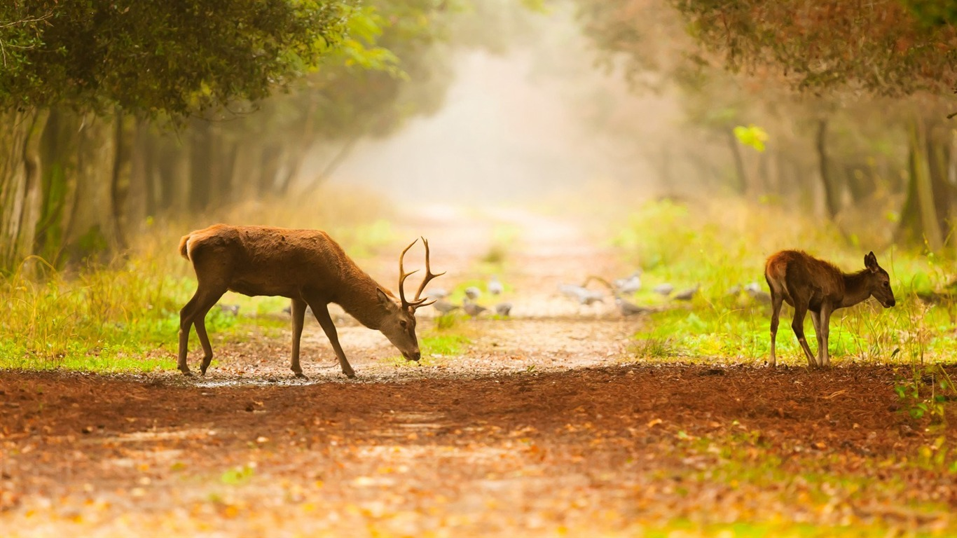trees_footpath_deer-Animal_Photo_Wallpaper