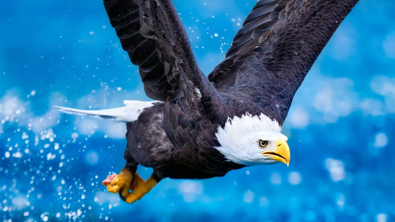 Eagle_flying_sky_predator-Animal_HD_Wallpaper