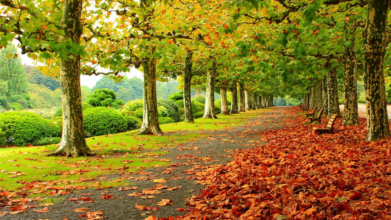 Autumn_Nature_Photography_HD_Wallpaper