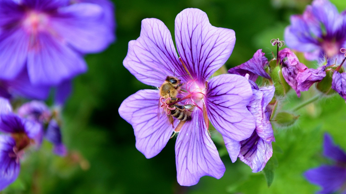 Flower_nectar_pollen_bee-High_Quality_HD_Wallpaper