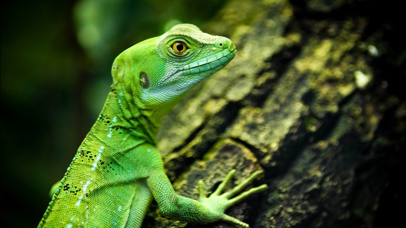Lizard_close-up_reptiles-Animal_High_Quality_Wallpaper