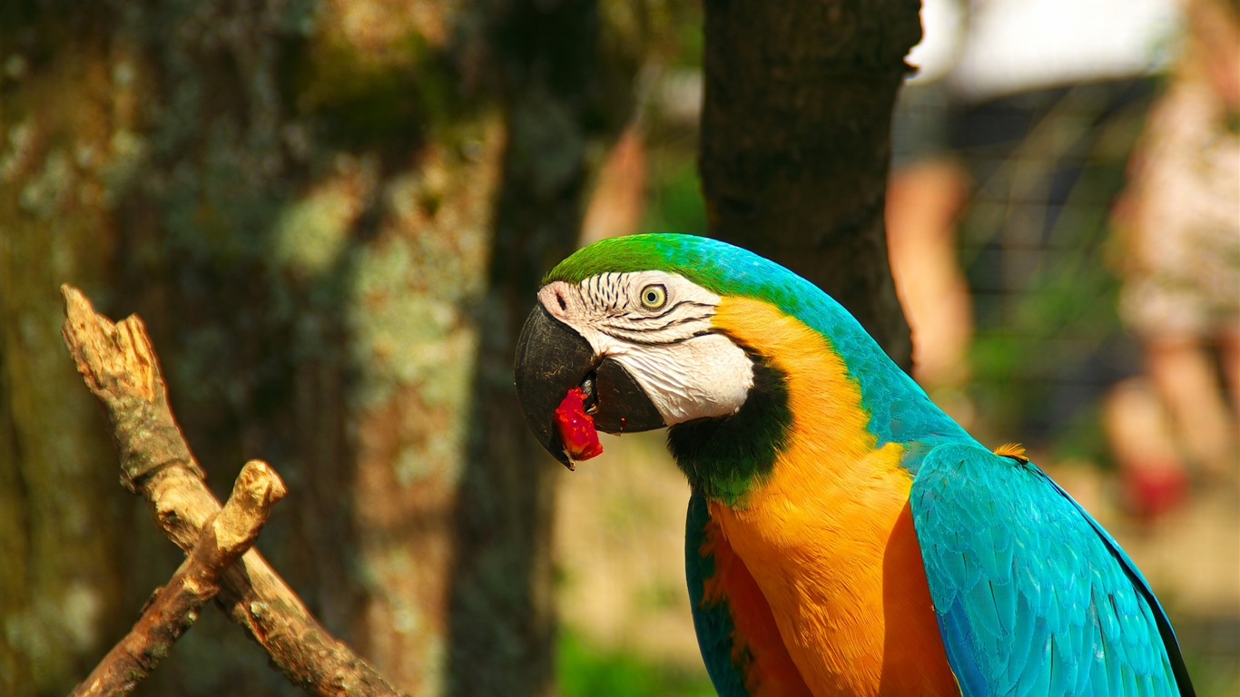 Parrot_macaw_bird_beak-2016_Animal_High_Quality_Wallpaper