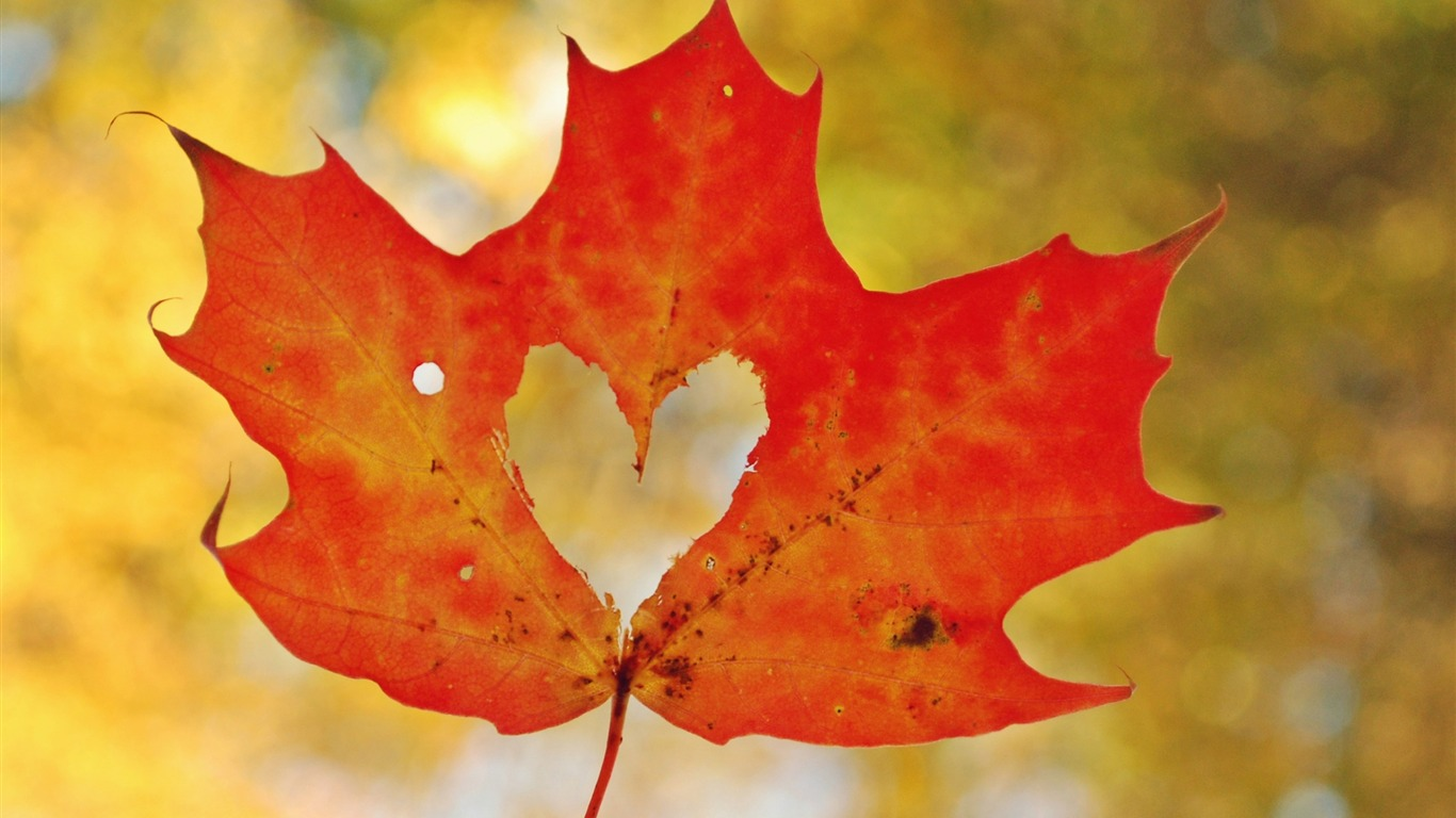 Love_heart_maple_leaf-High_Quality_HD_Wallpaper