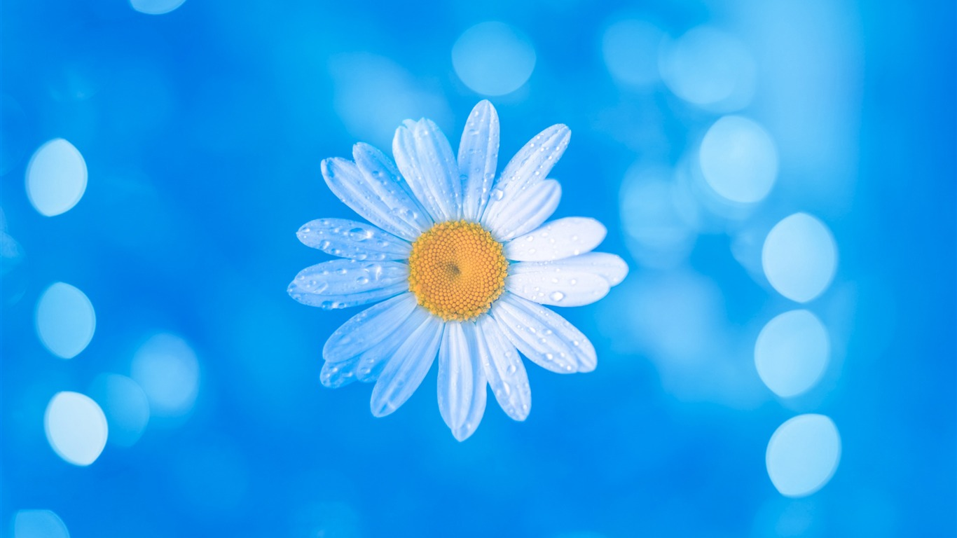 Chamomile_Blue_Bokeh-2017_High_Quality_Wallpapers