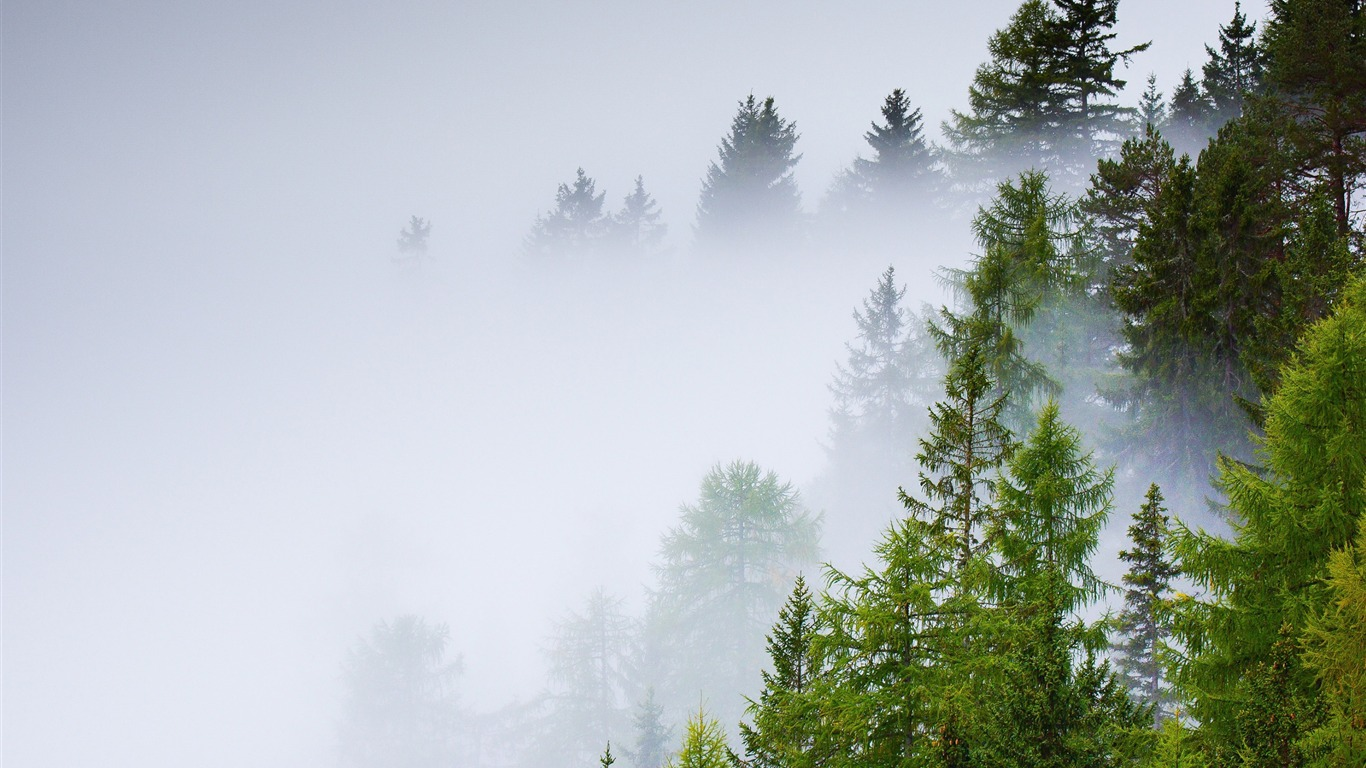 Conifer_forest_mist_rainy_day-Scenery_HD_Wallpaper