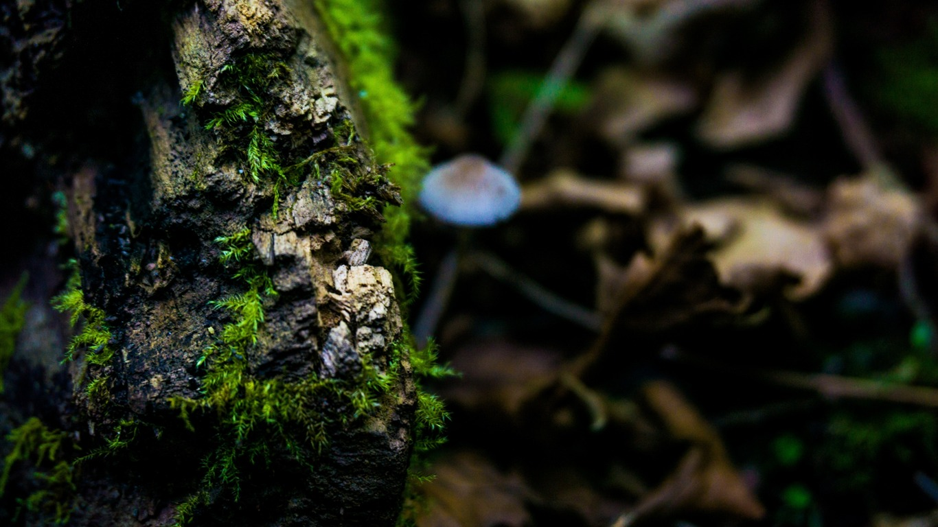 Moss_surface_close_up-High_Quality_Wallpaper