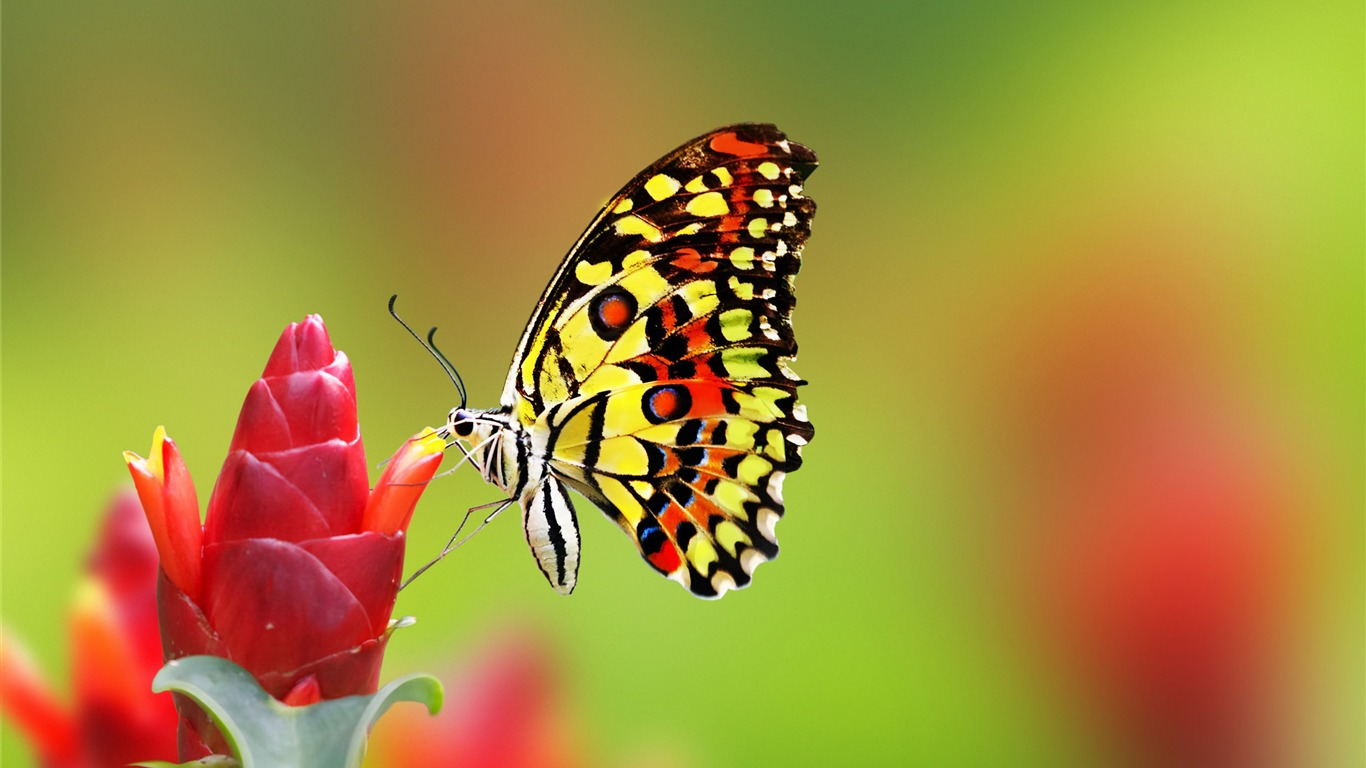 Butterfly_flowers_bokeh-2017_Animal_HD_Wallpaper