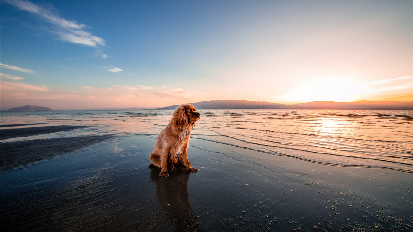 Dog_dusk_beach_seashore-2017_Animal_Wallpaper