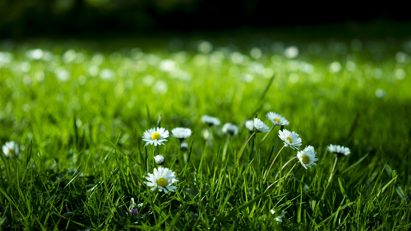 Blossom_flower_green_grass-Nature_HD_Wallpaper