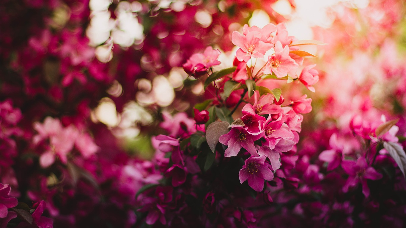Pink_Green_and_Purple_Flowers-Nature_HD_Wallpaper