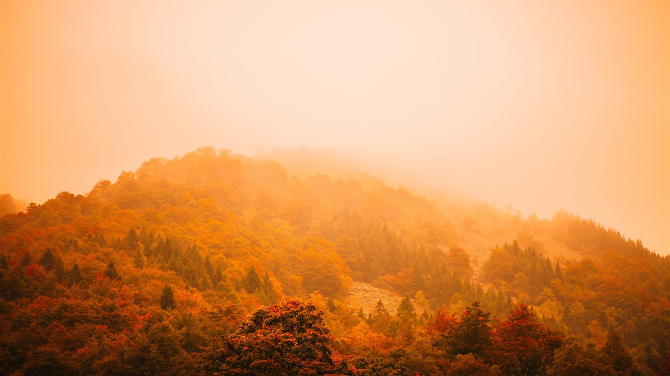 Autumn_morning_fog_forest_mountain_Photo_HD_Wallpaper