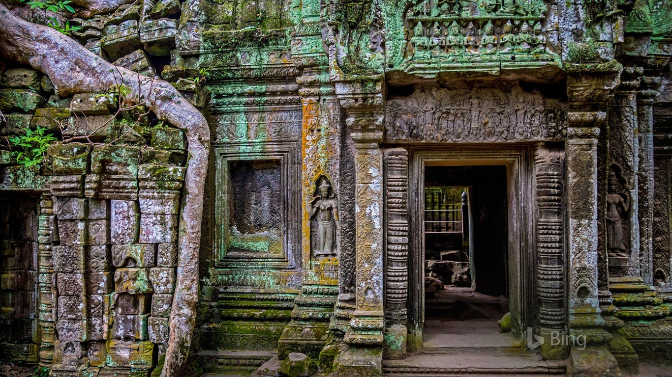 Cambodia_Ta_Prohm_temple_at_Angkor_2017_Bing_Wallpaper