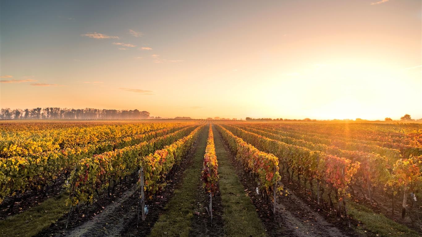 autumn grape manor sunset sunshine preview