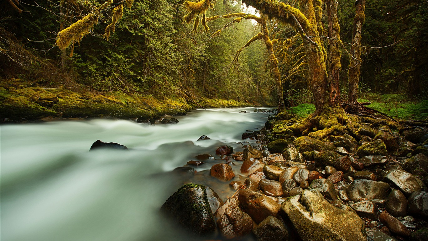 Original_forest_stream_moss_rock