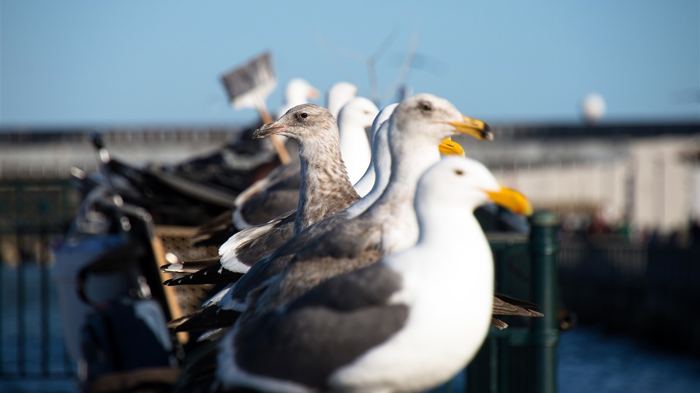 Wild_sea_gull_outdoor_harbor_guardrail